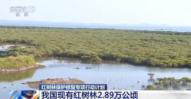 我国现有红树林2.89万公顷 面积有所增加但仍面临不少威胁