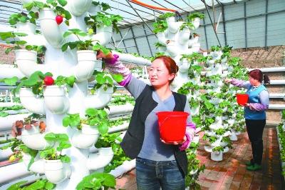 草莓种植技术的视频