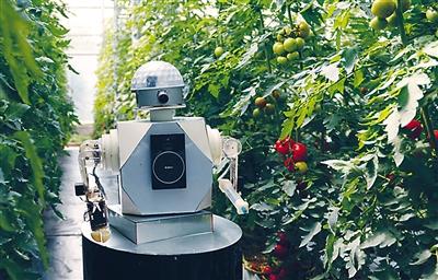 采摘机器人