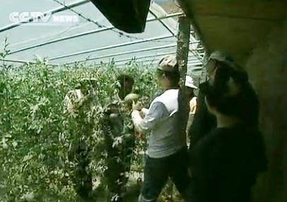 Every year, a single greenhouse can yield a profit of more than 10,000 yuan.