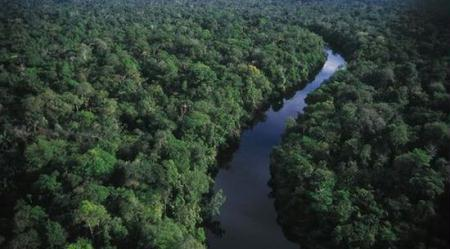 Africas tropical rainforests mitigate climate change cctv international recent scientific studies have revealed that africas tropical rainforests play sciox Image collections