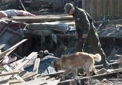 A police officer uses a dog to search for victims in Constitucion, Chile, Tuesday, March 2, 2010. (AP Photo/ Luis Hidalgo)