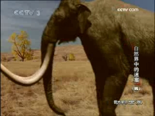 动物世界 2008年 第213期