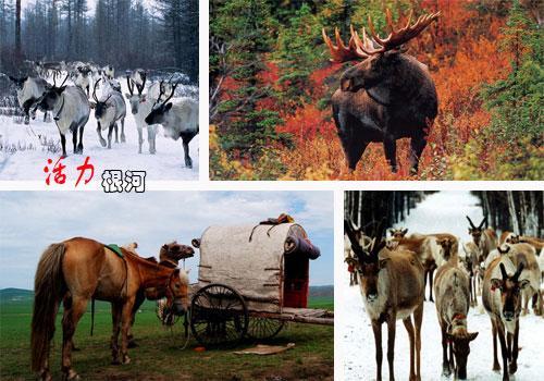 根河境内驻有内蒙古大兴安岭林业管理局所属的五个林