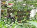 第十三届中国(寿光)蔬菜科技博览会开幕