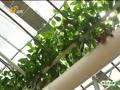 菜博会:名副其实的蔬菜科技绿色大观园