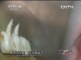 鲁菜名厨颜景祥 流行无限 20130526