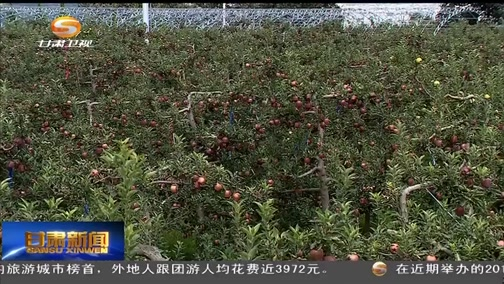 """[田东县残疾人联合会新闻]天水:""""网络直播+电商""""让农产品插上翅膀"""