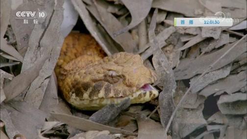 《自然传奇》 20191128 毒蛇与怪蜥