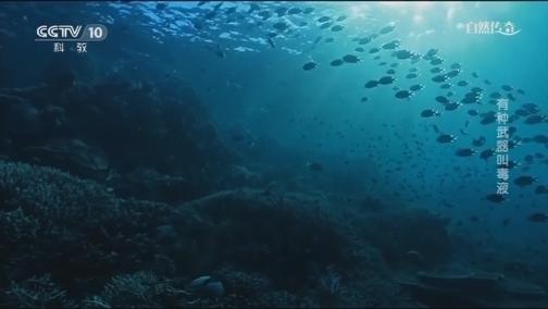 [自然传奇]它的毒比响尾蛇致命十倍 水下捕猎争分夺秒