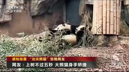 """[今日亚洲]感知地震 """"功夫熊猫""""惊艳网友"""