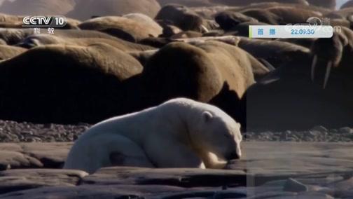 《自然传奇》 20200108 极地生存挑战