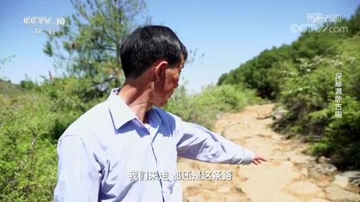 [探索·发现]琉璃珠为何会出现在大逸圃村