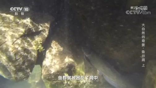 《地理·中国》 20200217 大自然的奇景·鱼谷洞 上