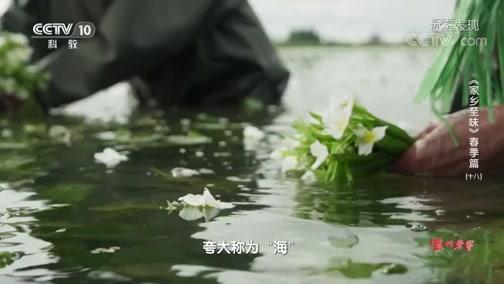 [探索·发现]水生药用植物海菜花