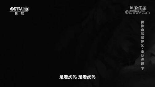 [地理·中国]科考队拍到野生东北虎出没的影像