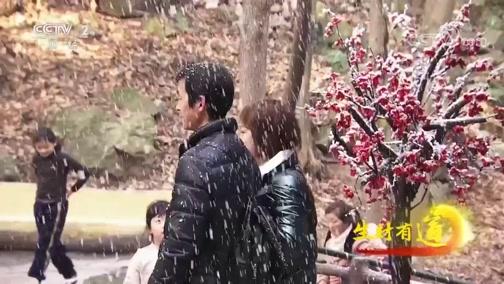[生财有道]楠木飞雪让游客体验不一样的四季雪景