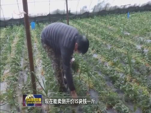 [吉林新闻联播]磐石红旗岭镇草莓滞销 各方帮忙找销路