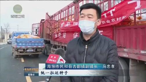 [青海新闻联播]青海:防疫生产齐推进 农牧业发展不落下