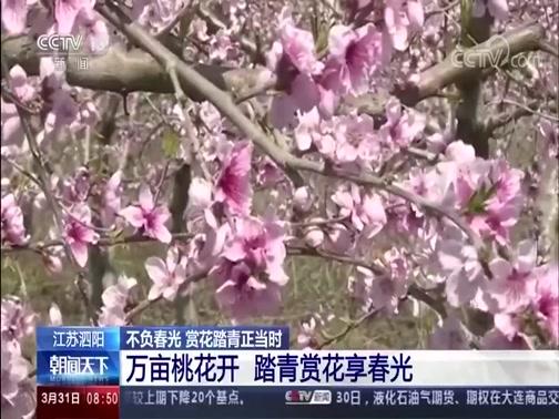 [朝闻天下]河南新乡 不负春光 赏花踏青正当时 梨花飘雪油菜花撒金 绚丽多彩引游人