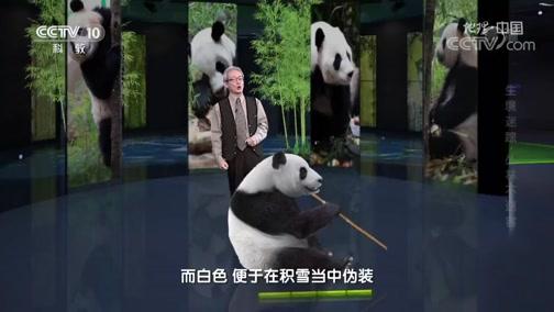 [地理·中国]大熊猫的进化