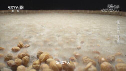 《探索·发现》 20200729 《家乡至味》夏季篇(十九)