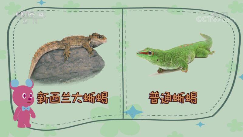 [智慧树]道哥和摩尔:新西兰大蜥蜴
