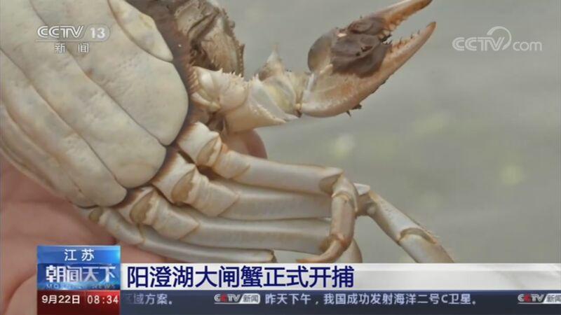 [朝闻天下]江苏 阳澄湖大闸蟹正式开捕央视网2020年09月22日08:46