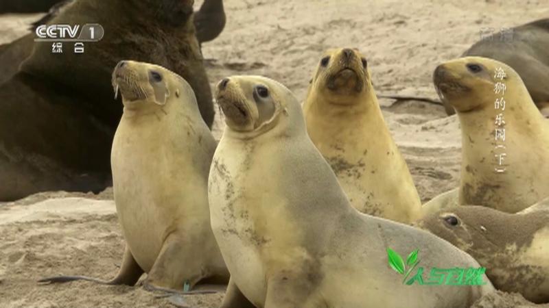 《人与自然》 20210430 海狮的乐园(下)