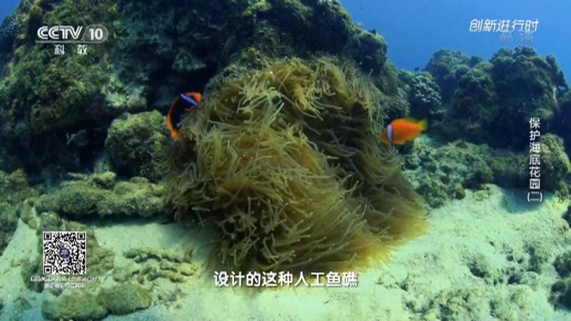 《创新进行时》 20210525 保护海底花园(二)