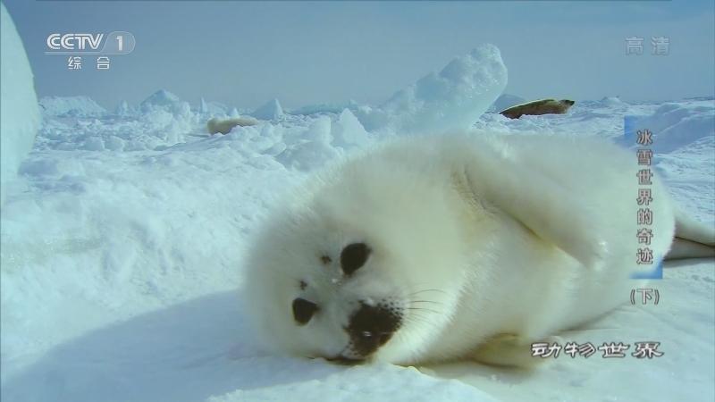 《动物世界》 20210708 冰雪世界的奇迹(下)
