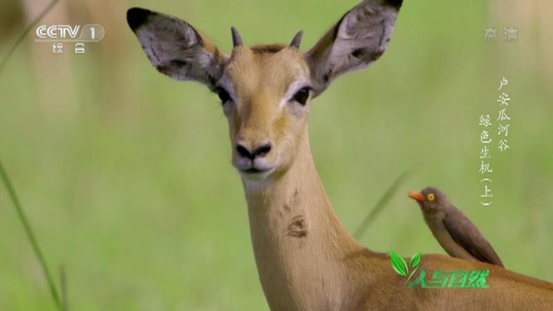 《人与自然》 20210916 卢安瓜河谷——绿色生机(上)