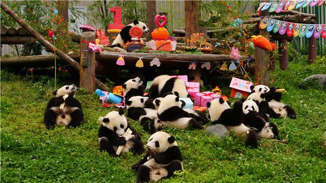 2018級大熊貓寶寶集體慶生