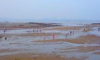 中央生态环境保护督察进行时:湖里区提前完成海域超规划养殖整治任务[今日视区 2019.08.15] 00:01:35