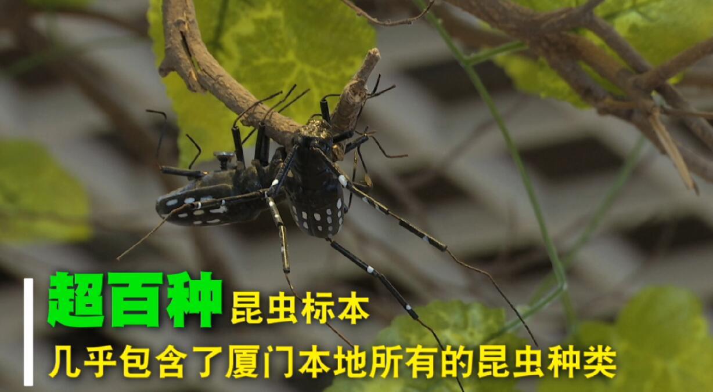 植物医生陈和杰的昆虫展览馆 00:00:42