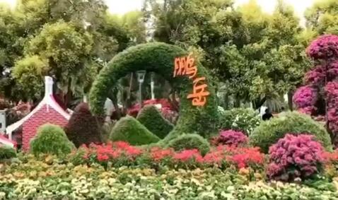 """厦门市庆祝新中国成立70周年""""艺景杯""""市花展在园博苑开展 00:00:33"""