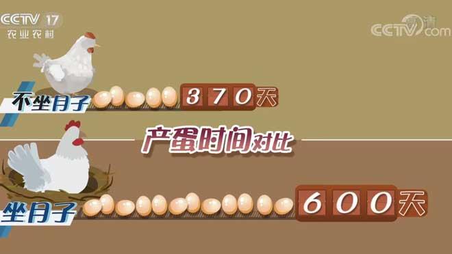 [致富经]新招养鸡 蛋中求财20200720
