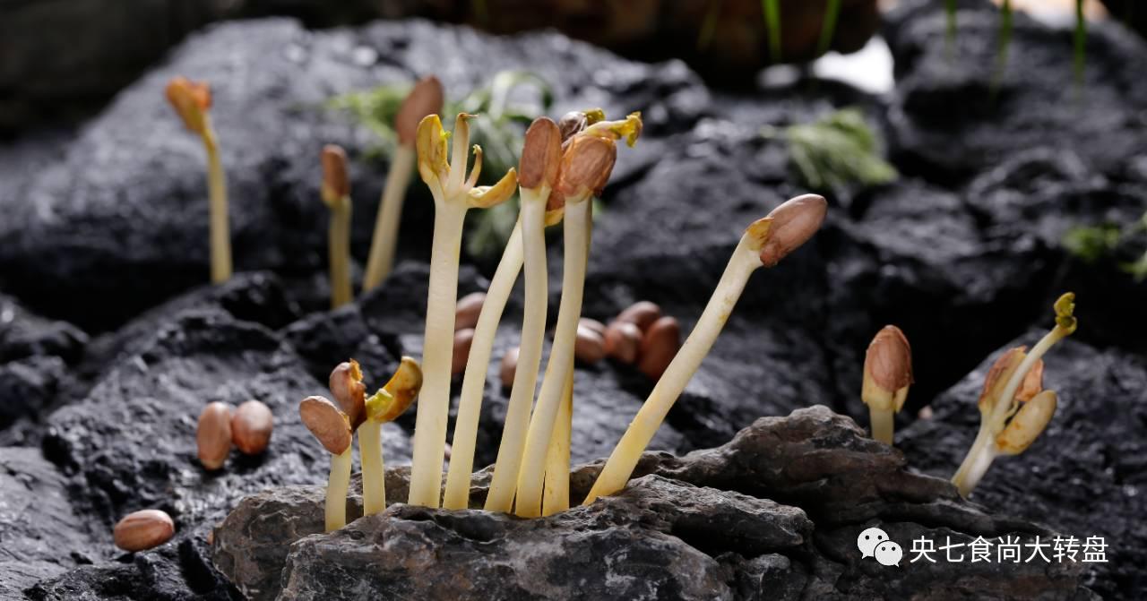 它发了芽再吃,是天然抗癌物!降脂、通血管,胜吃无数补药!  一斤花生出几斤花生芽