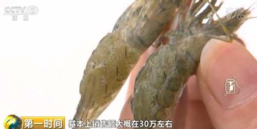 江苏金坛:抱籽青虾上市 味美价高收益丰