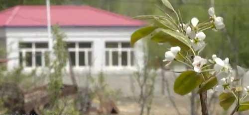 内蒙古:小村庄种出大片林 防沙固土又增收