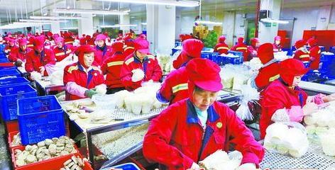 如意情集团金针菇生产基地