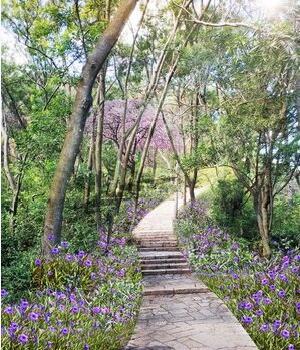 ●狐尾山望月亭-清风亭游步道