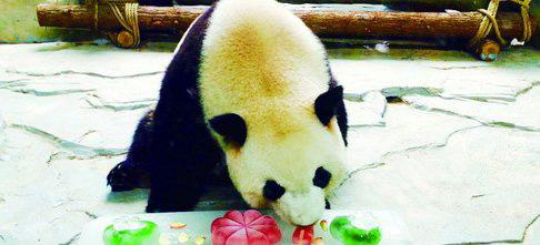 熊猫吃冰镇水果。