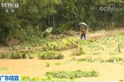 广东信宜:受强降雨影响 村庄被淹农作物受损