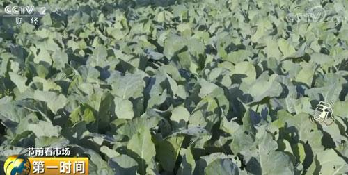 云南通海:蔬菜价格总体平稳 市场供应充足