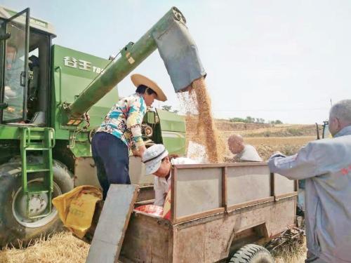 """山西省农业社会化服务:""""生产托管""""描绘现代农业画卷"""
