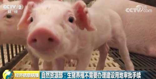 自然资源部:生猪养殖不需要办理建设用地审批手续