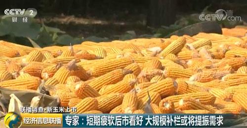 """山东:玉米加工企业""""压价"""" 贸易商小批量收购"""