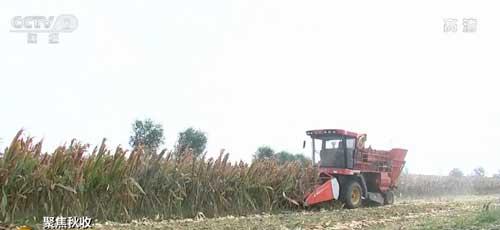 聚焦秋收|提炼乙醇 玉米工业用途已打开