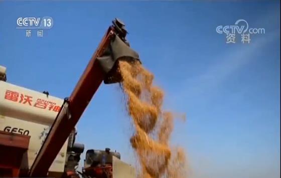 《中国的粮食安全》白皮书发表 两个重要指标双双超过6.5亿吨